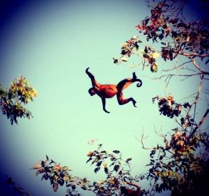 Monkey jumping monkey 2
