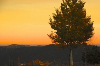 001 tree