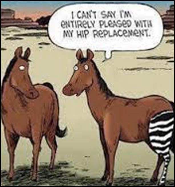 0 horse hip